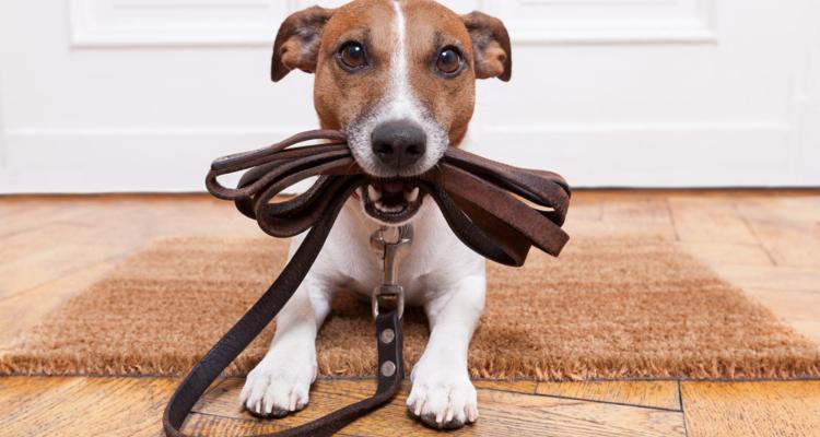 Kurs für Hundehalter